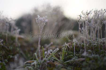 close up of frozen plants growing