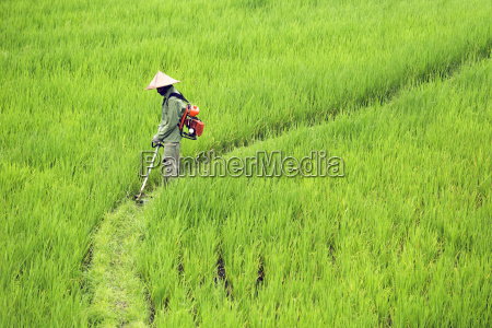 side view of farmer spraying insecticide