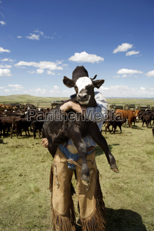 man carrying calf while standing in