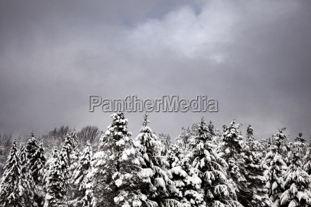 view of snow covered trees against