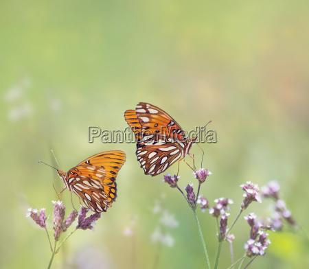 animal insecto flor planta mariposa fauna
