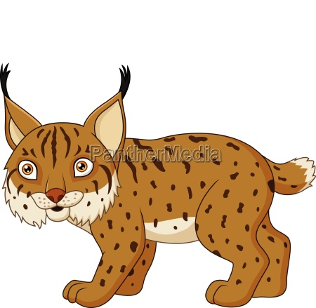cartoon lynx isolated on a white