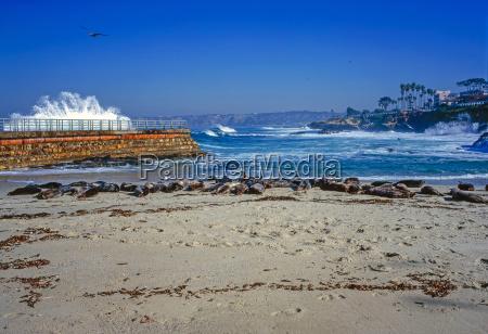 pacific coast in la jolla california