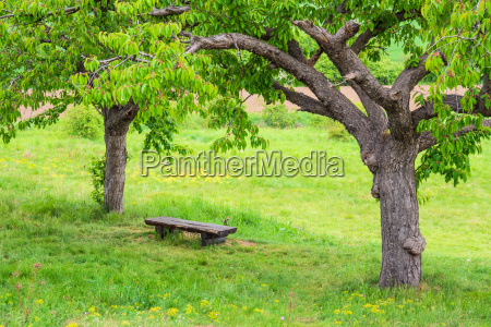 landscape with trees and bench in