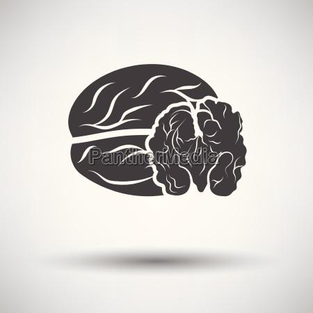 walnut icon
