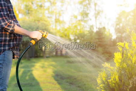 pregnant woman watering green tree with