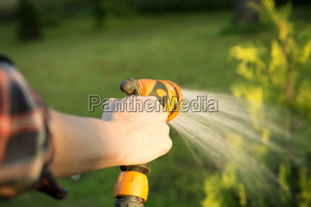 watering green tree with hose gardening