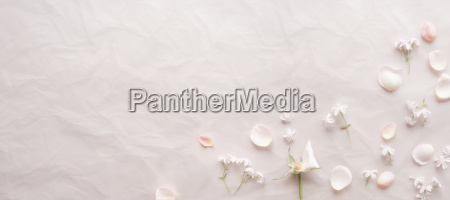 pink background with petals