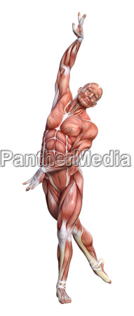 3d rendering male anatomy figure on