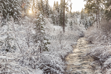 stream amidst plants covered with snow