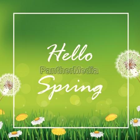 beautiful spring or summer season nature