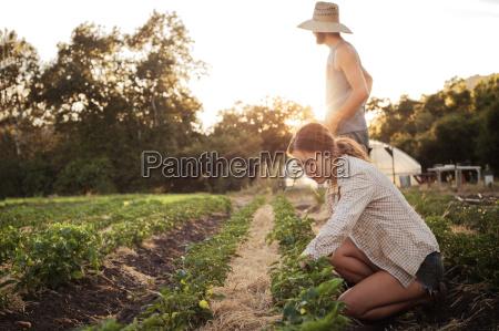 female farmer working on field while