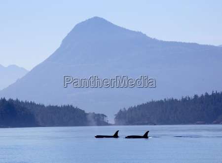 two whales in a bay mountains