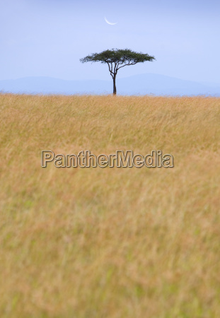 view across african savanna with distant