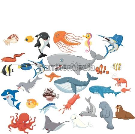 cartoon sea animals isolated on white