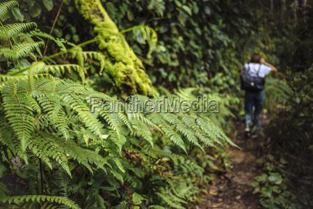 young hiker cameron highlands malaysia