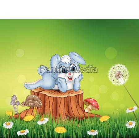 cute little bunny on tree stump