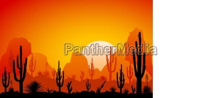 desert the sunset