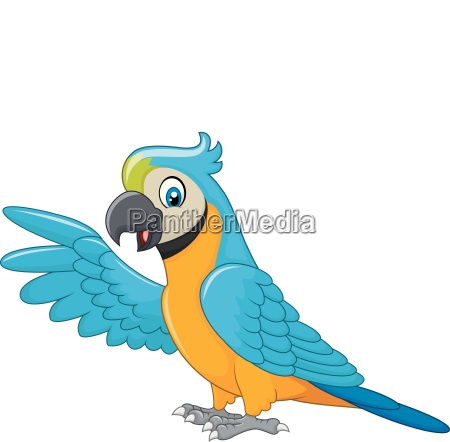 cartoon macaw presenting isolated on white