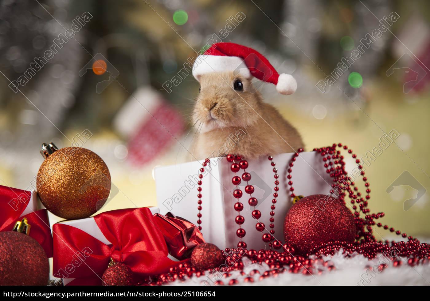 bunny, and, christmas, background - 25106654