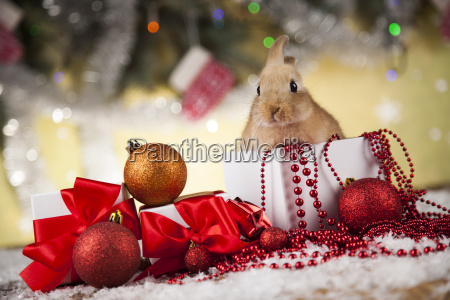 little, bunny, funny, rabbit, on, christmas, background - 25106650