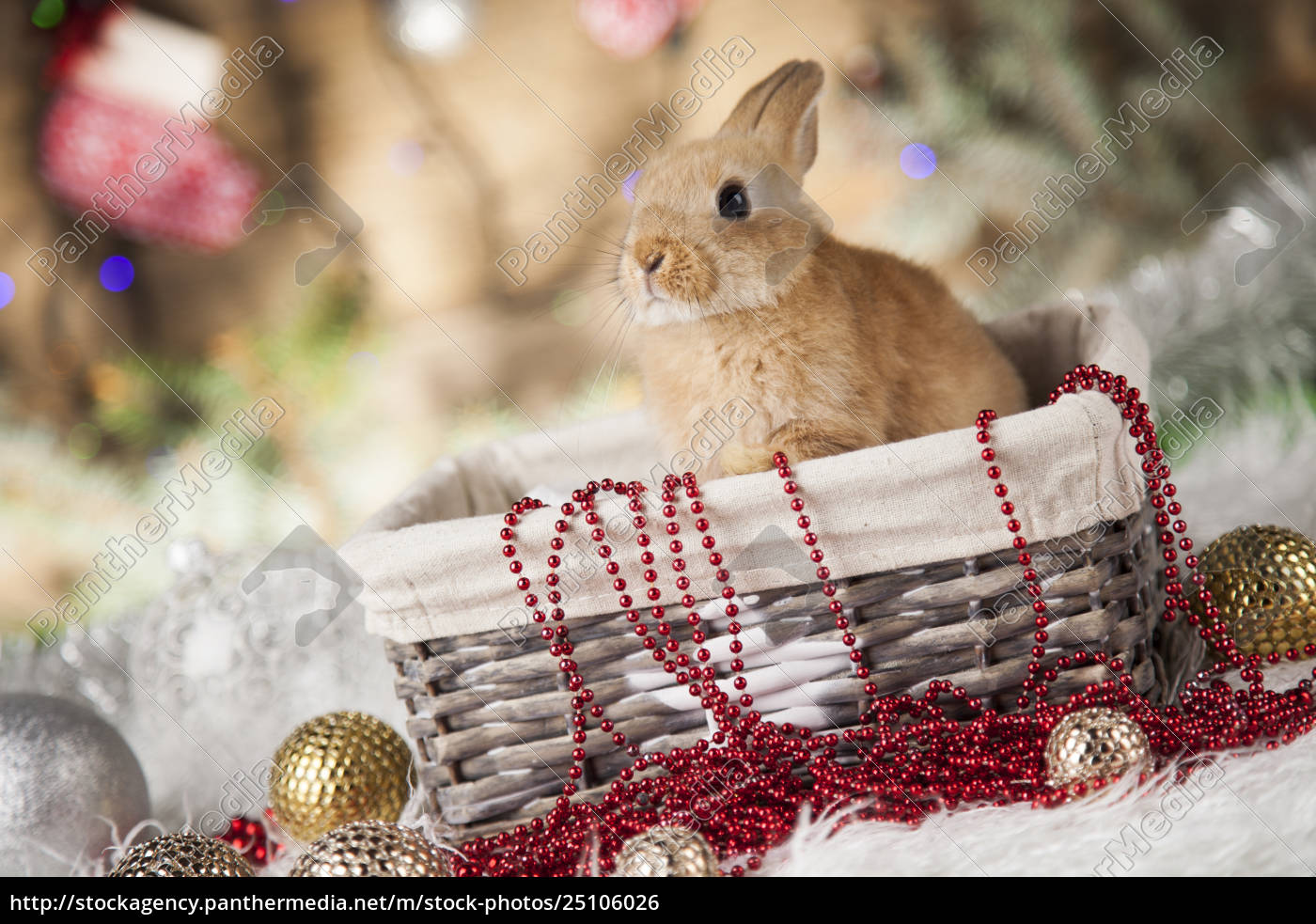 little, santa, bunny, on, christmas, background - 25106026
