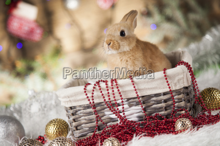little, santa, bunny, on, christmas, background - 25106026