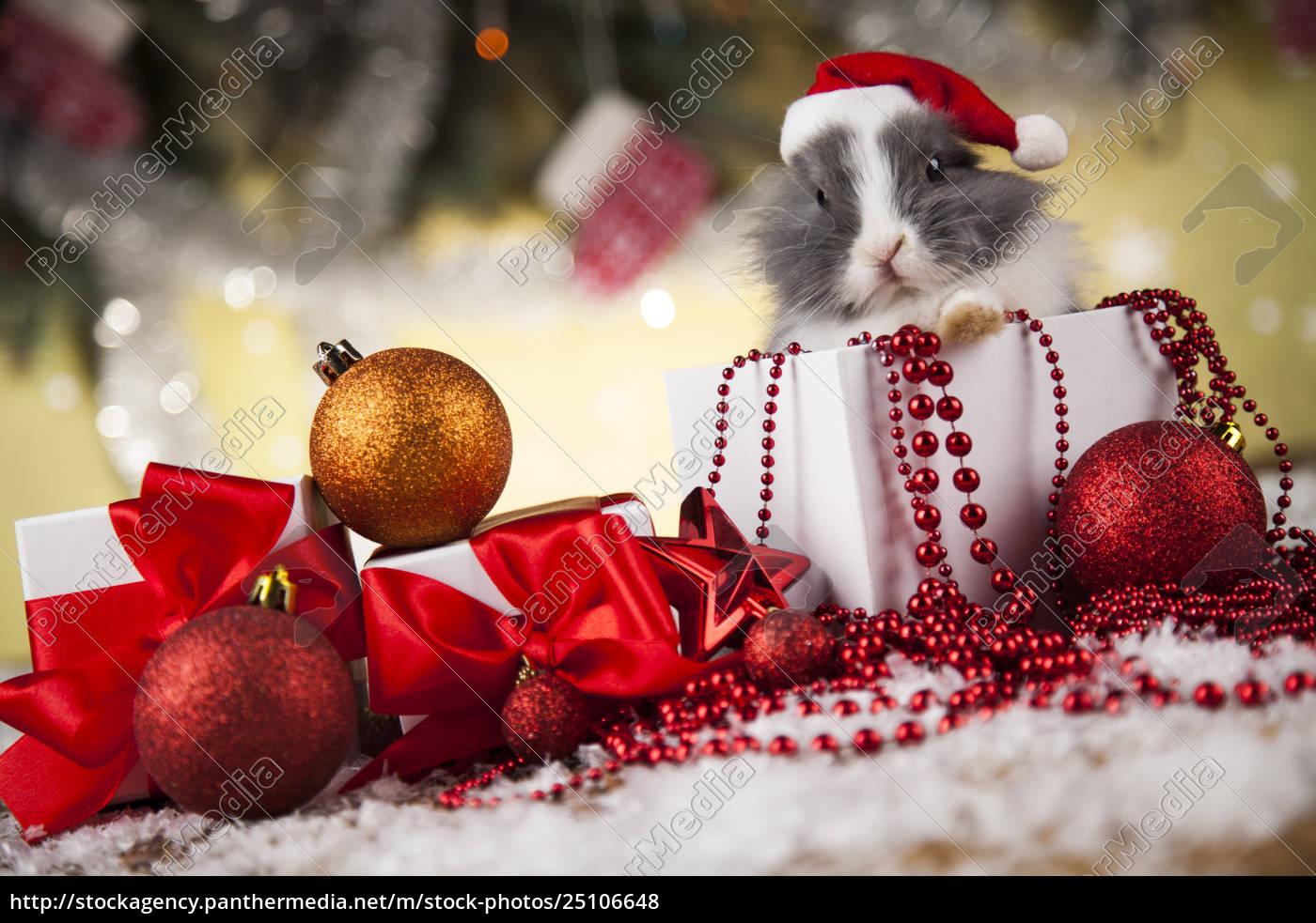 rabbit, in, red, santa, hats, , holiday - 25106648