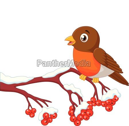 cartoon beautiful robin bird posing on