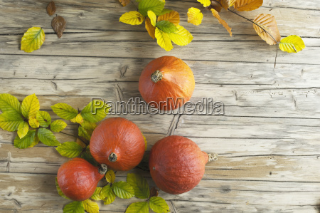 hokkaido pumpkins and autumn leaves