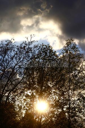 germany tree against sun