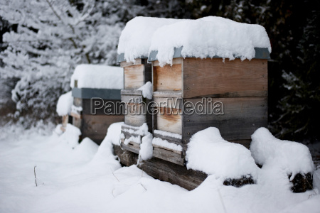 germany snow covered beehives on farm
