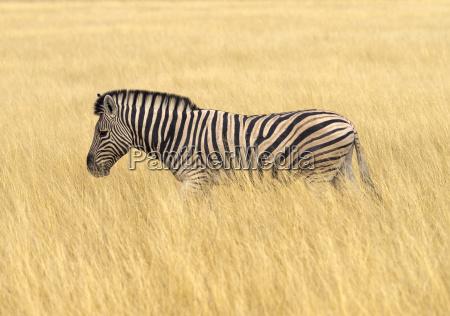 africa namibia etosha national park plains