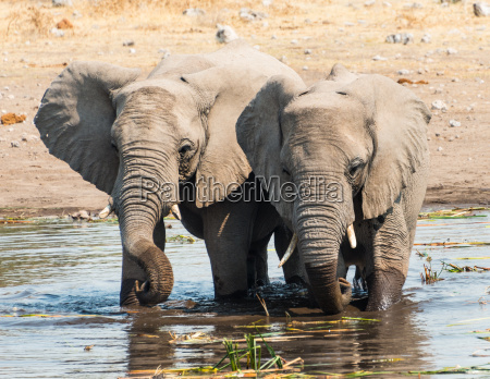 two small elephants stand next to