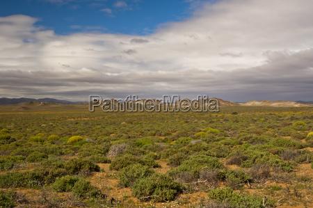 bucolic national park africa savannah sights