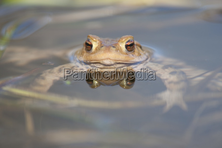 animal amphibian fauna animals sights europe
