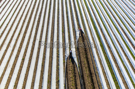 aerial perspective agricultural agriculturally plant cultivate