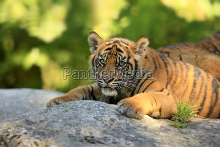 closeup stone animal mammal fauna animals