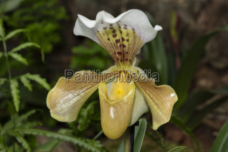closeup flower plant bloom blossom flourish