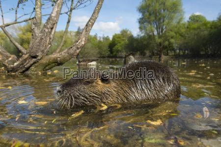 waters animal mammal fauna animals sights