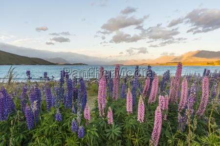 bucolic flower plant bloom blossom flourish