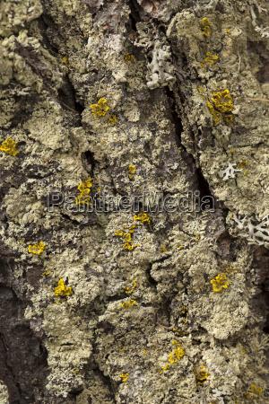 closeup europe deserted overgrows symbiosis plait