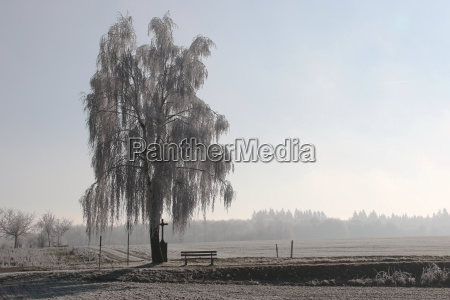 freestanding plant cultivate implant winter cold
