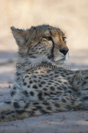 closeup mammal fauna national park africa