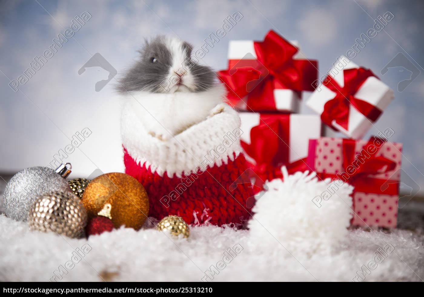 animal, , rabbit, , bunny, on, christmas, background - 25313210