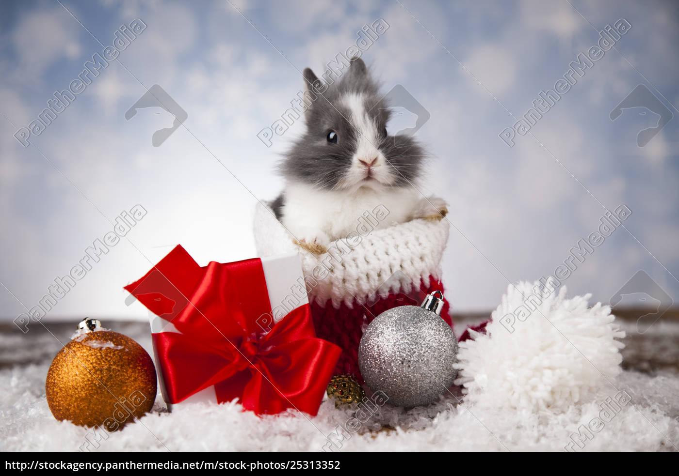animal, , rabbit, , bunny, on, christmas, background - 25313352