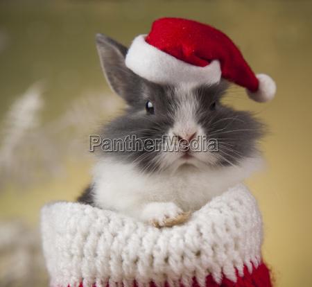 animal, , rabbit, , bunny, on, christmas, background - 25313844