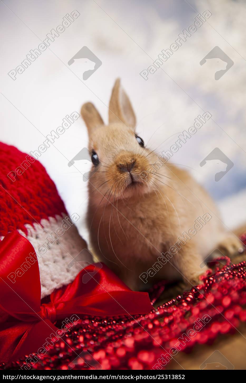 animal, , rabbit, , bunny, on, christmas, background - 25313852