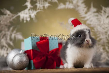 christmas, bunny, , santa, baby, red, hat - 25313216