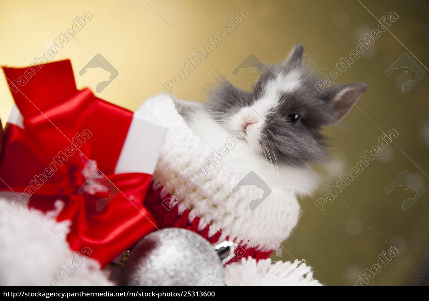 christmas, bunny, , santa, baby, red, hat - 25313600